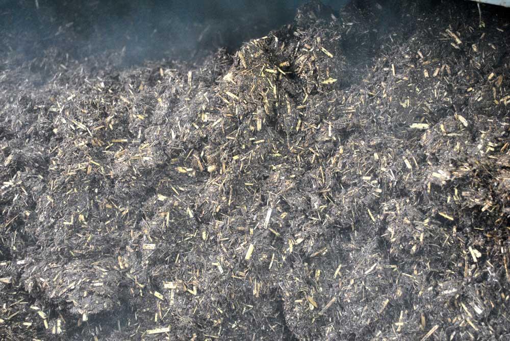 Blanc de Gris : Substrat Pasteurisation